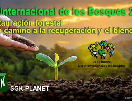 Día Internacional de los Bosques, 21 de marzo 2021
